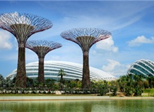 Gardens By The Bay Adult Ticket (Admission To Flower Dome And Cloud Forest)
